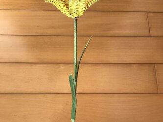 ラタン(籐)の花 ~黄色のユリ~の画像