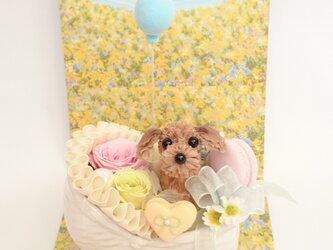 「こんにちは♡赤ちゃん」~トイ・プードル~お花で作ったワンちゃんの画像