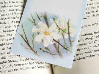 水彩画一筆箋104「こぶし」25枚の画像