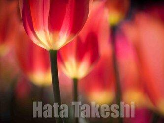 【A-80】A-4サイズ 3枚 1セット 1800円【送料無料】草花のアート写真の画像