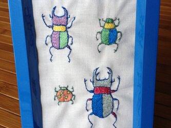 カラフル甲虫標本の画像
