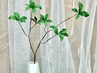 ドウダンツツジ風枝の画像