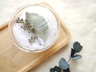 植物標本 ■シャーレ仕立て■ ユーカリ ポポラスの画像