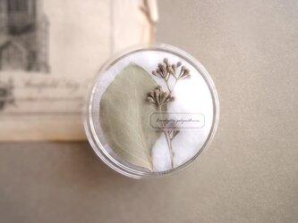 植物標本 ■ シャーレ仕立て ■ ユーカリ ポポラスの画像