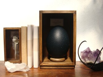 エミューの卵標本その参。の画像