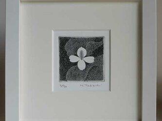 白い花・2018A/ 銅版画 (額あり)の画像