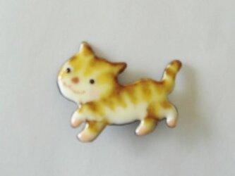 七宝 縞猫のお散歩の画像
