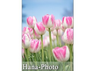 1301) 可愛い!!    ポストカード5枚組の画像