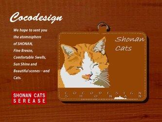 湘南Catsパスケース 004 ほんわか茶トラの画像