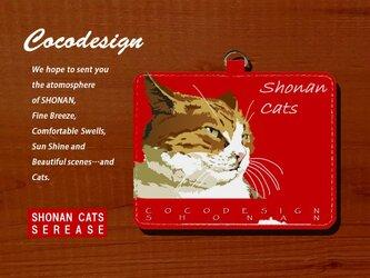湘南Catsパスケース 005 ハンサムトラ猫の画像
