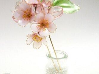 桜簪:花明かりーhanaakariーの画像