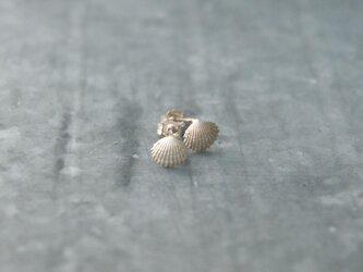 小さな貝殻のピアス 銀の画像