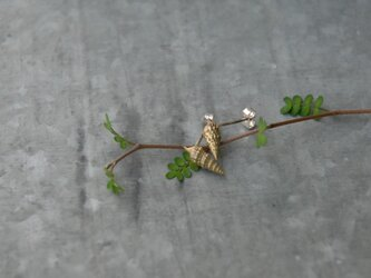 小さな巻貝のピアス 真鍮の画像