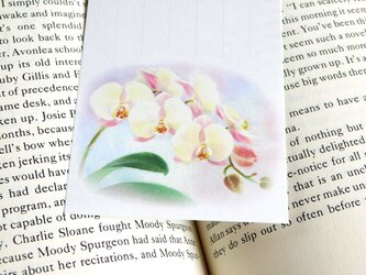 水彩画一筆箋120「胡蝶蘭」25枚の画像