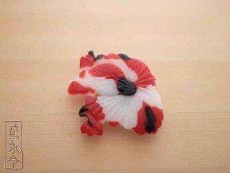 帯留 白と赤と黒色の金魚の画像