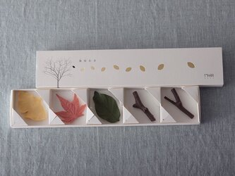 葉枝おき-カラーの画像