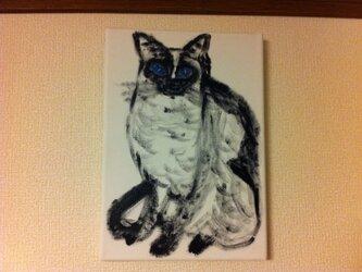 凛と佇むシャム猫の画像