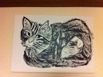 様子を伺う人懐っこい野良猫ちゃんの画像