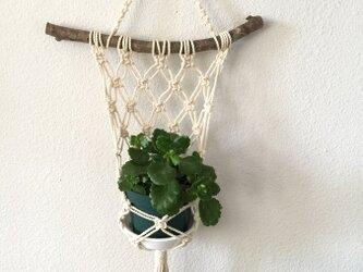 壁掛け型~マンサクの枝とマクラメ編みのプラントハンガーの画像