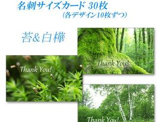 緑! 苔&白樺   名刺サイズサンキューカード   30枚の画像