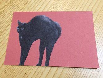 ネコポストカード 黒猫 クロネコの画像