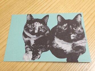 ネコポストカード サビ猫ズの画像