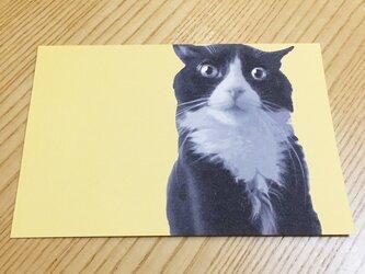 ネコポストカード ハチワレびっくり猫の画像