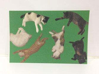 ころがるネコたちポストカードの画像
