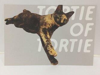 ごろーんするサビ猫ポストカードの画像