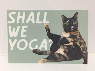 ころがるネコたちポストカードヨガサビ猫ポストカードの画像