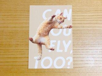 飛ぶ猫ポストカード CAN YOU FLY TOO?の画像