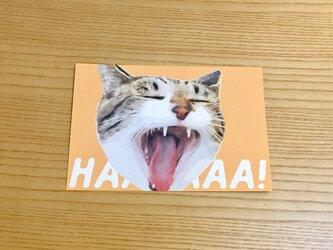 あくび猫ポストカードの画像