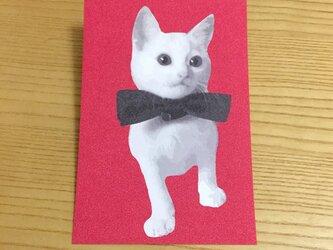 しろねこ子猫のポストカードの画像