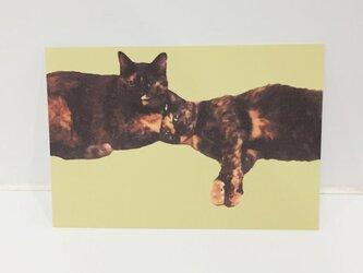 べったりサビ猫ズポストカードの画像