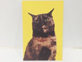 凛としてサビ猫ポストカードの画像