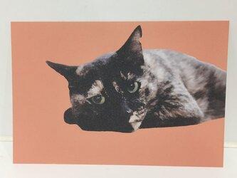ねそべるサビ猫ポストカードの画像
