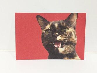 しゃべるサビ猫ポストカードの画像