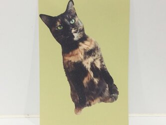 スタンディングサビ猫ポストカードの画像