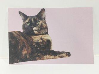 あっちを向くサビ猫ポストカードの画像
