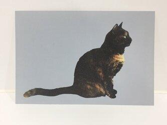 横をむくサビ猫ポストカードの画像