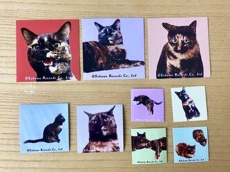 サビ猫まみれシール9枚セットの画像