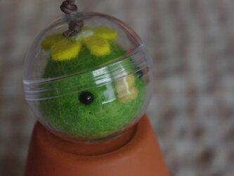 カプセル hacchi (mini)の画像