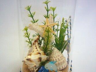 コルクガラス 枝サンゴの画像