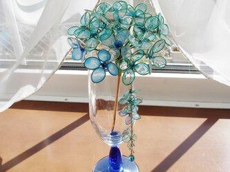 サファイアオーロラの紫陽花(かんざし)の画像