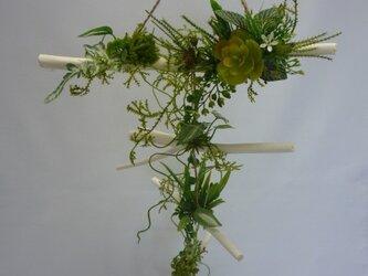 多肉植物ハンキングの画像