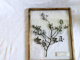 【植物標本シリーズ】ノイバラの切り絵フレーム_Aの画像