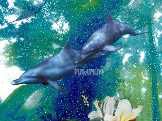イルカの森-1 PR--A4-036 写真画 イルカ 森 巨樹 大木 島の画像