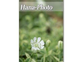 1318) 小さな花たち   ポストカード5枚組の画像