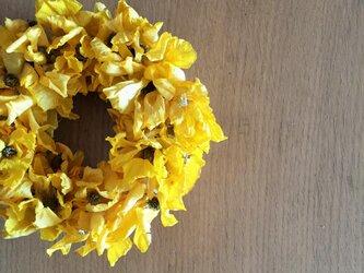 小さな ひらひらの黄色いリース ラナンキュラスの画像