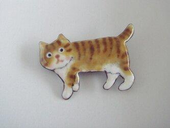 七宝 お散歩中の縞猫の画像